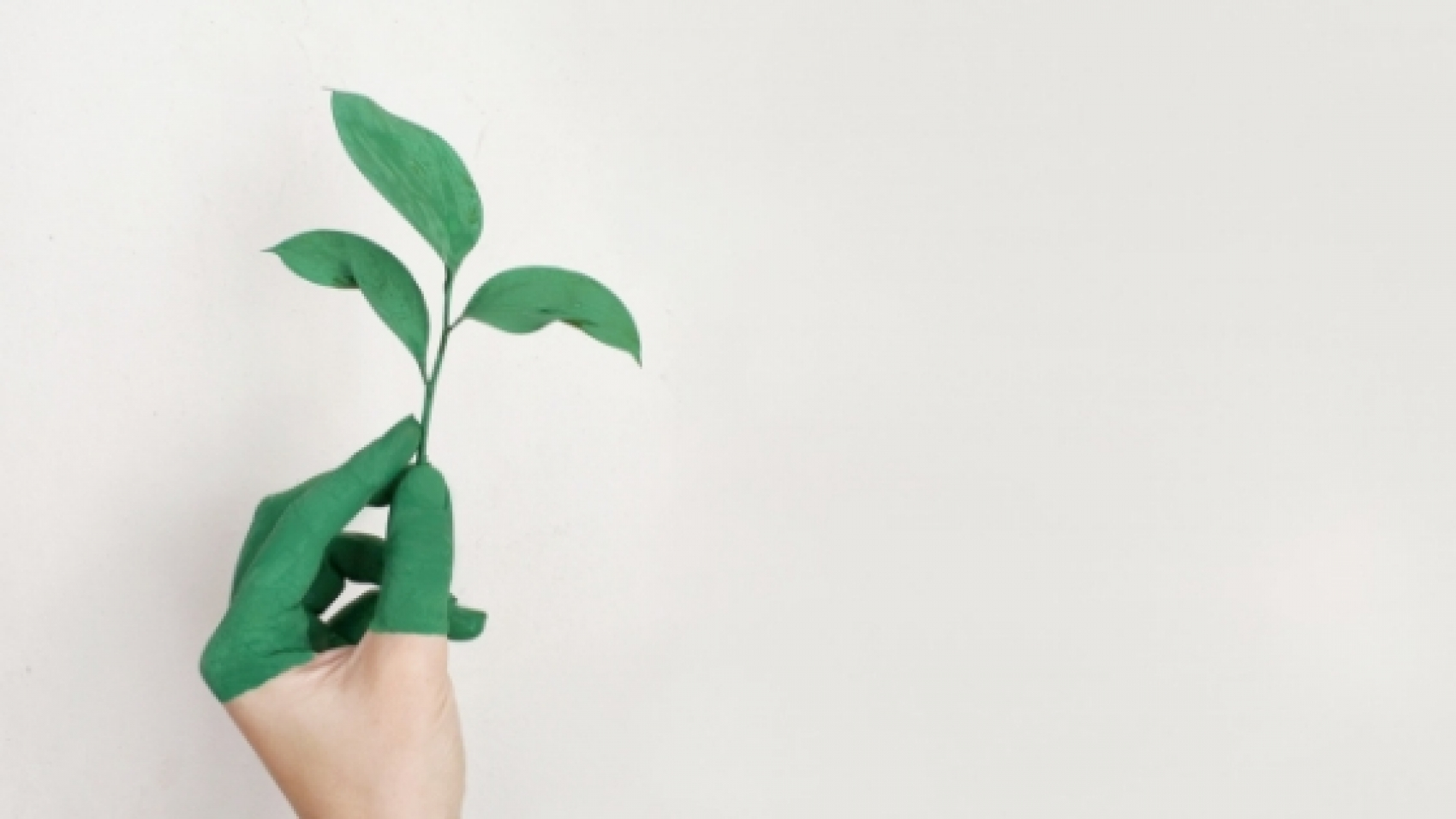 5 tips to go green sustainability